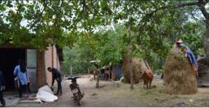 Ede agriculture Vietnam minority